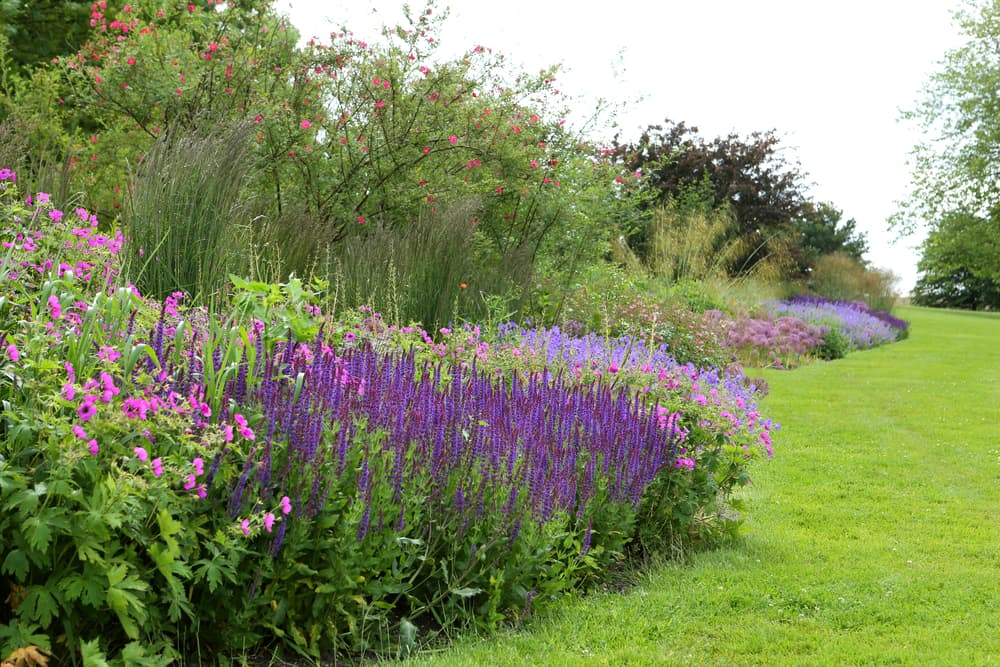 beautiful herbaceous border with lavender