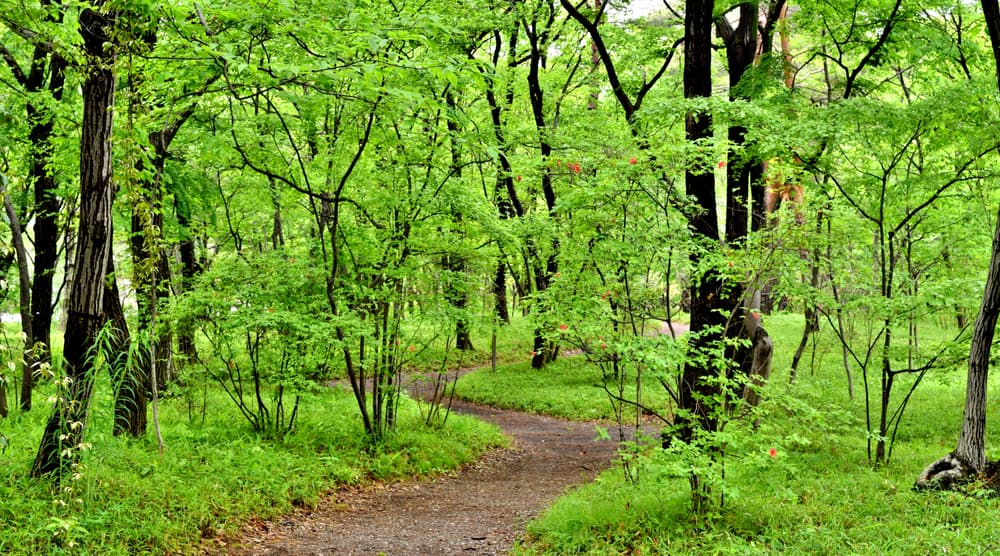 a winding path through a forested area
