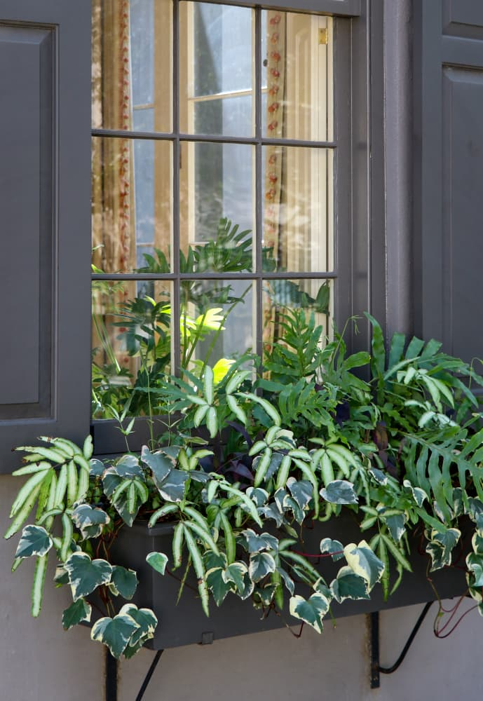 ferns and ivy in a grey window box outside a home