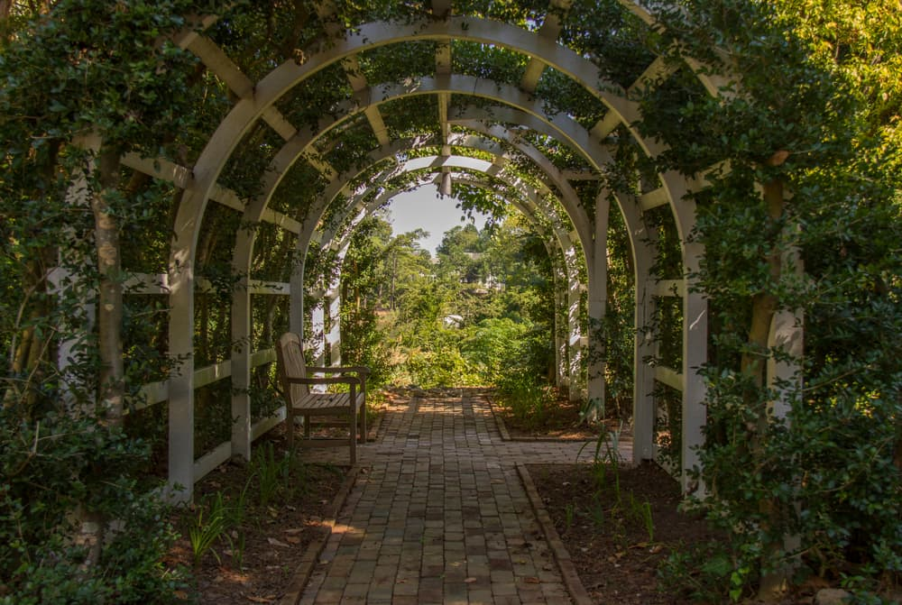 vine covered archway with a path and garden bench