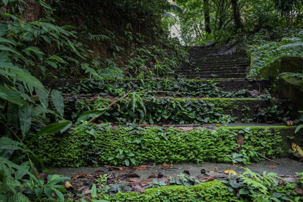 old concrete stairs with moss and ferns