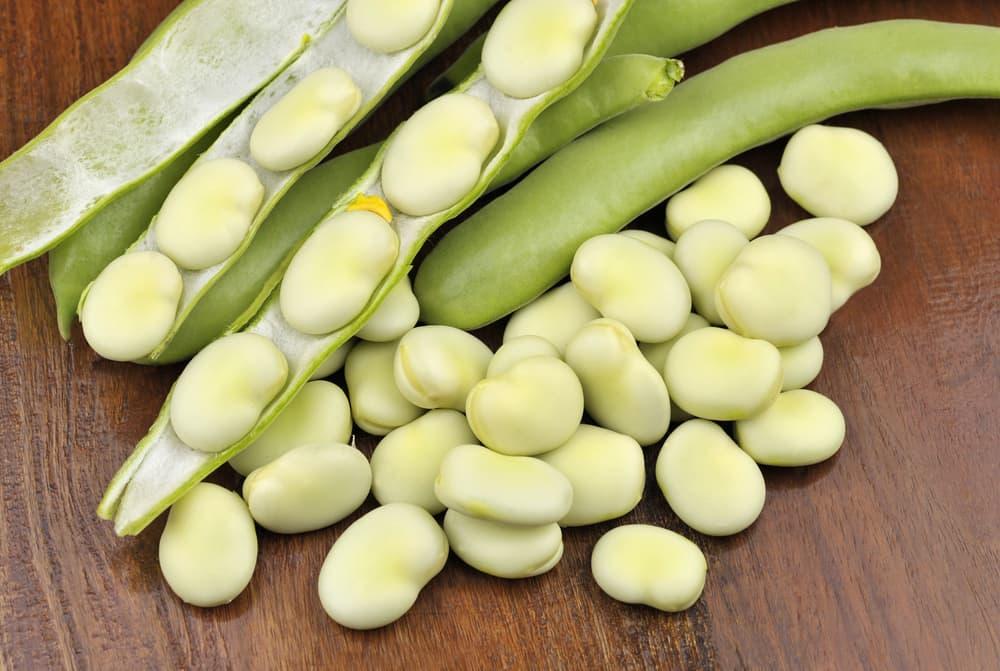freshly picked Witkiem Manita beans