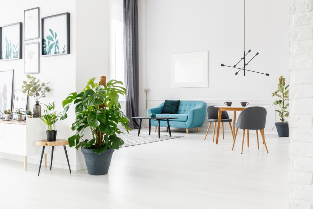 a modern home interior with nordic furniture and multiple houseplants