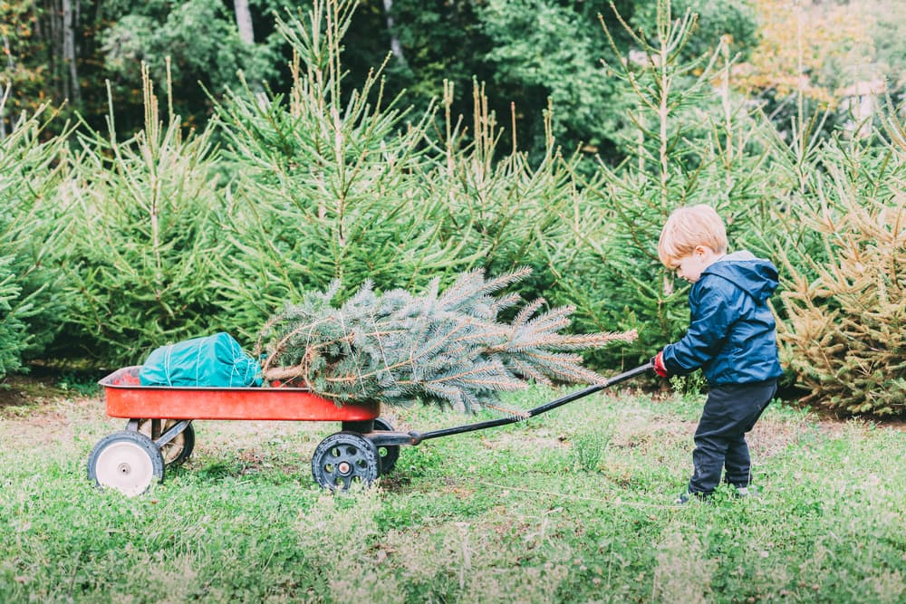 a containerised tree being pushed in a red cart by a young boy