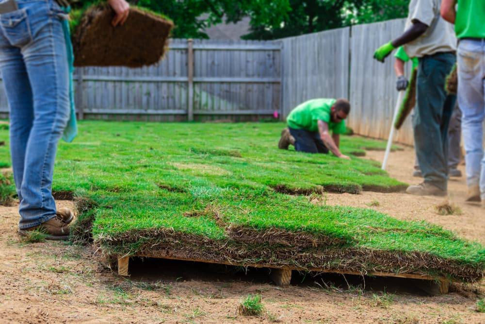 multiple people laying rolls of garden lawn