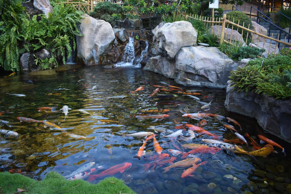 a koi pond with surrounding rocks