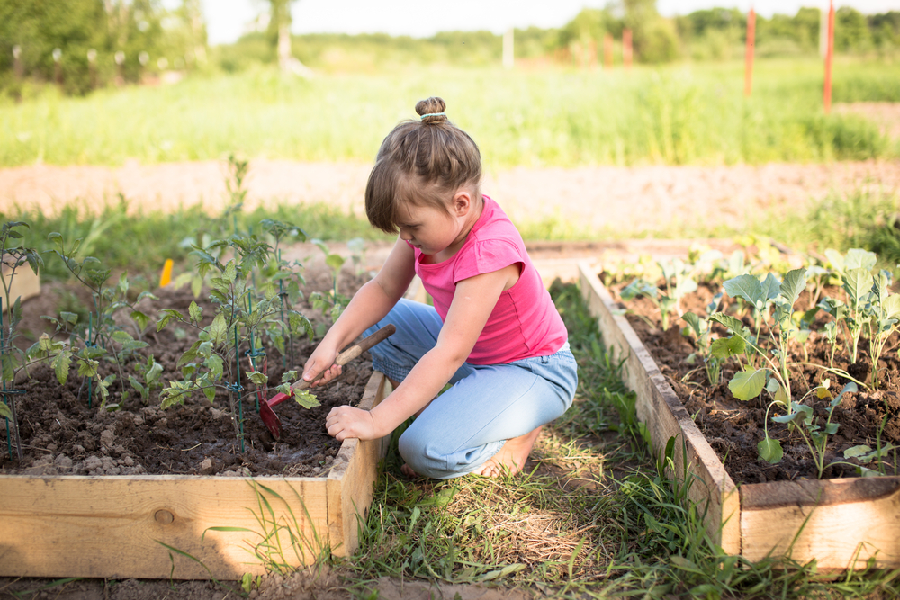 a child working on raised beds with vegetable plants