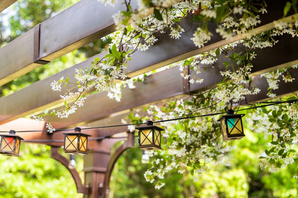 a pergola with string lighting and climbing plants with white flowers