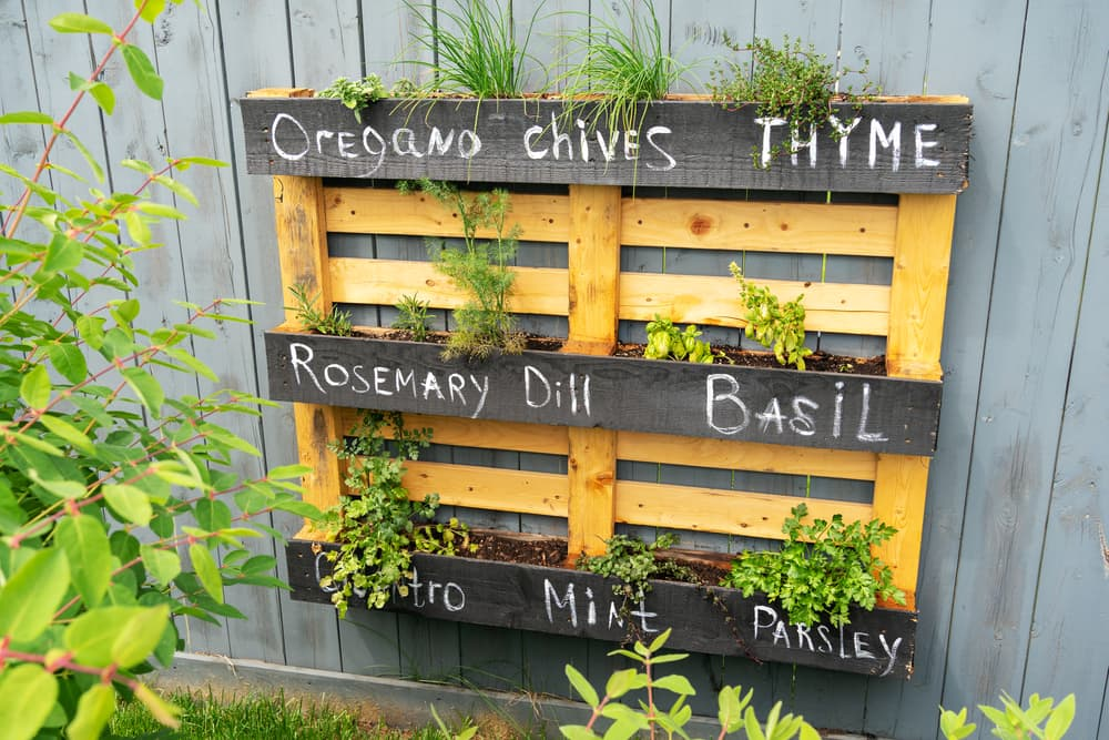 a wood pallet labelled with different plants including oregano, chives, thyme, rosemary, dill, basil, cilantro, mint and parsley