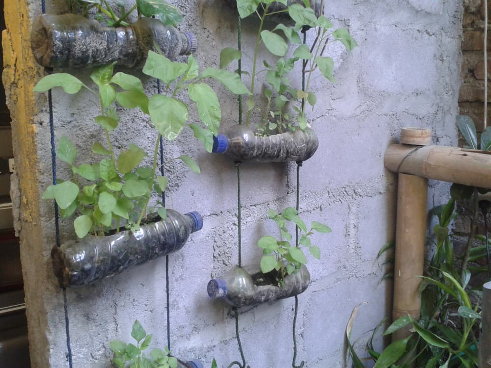 spinach growing in plastic bottles hung vertically