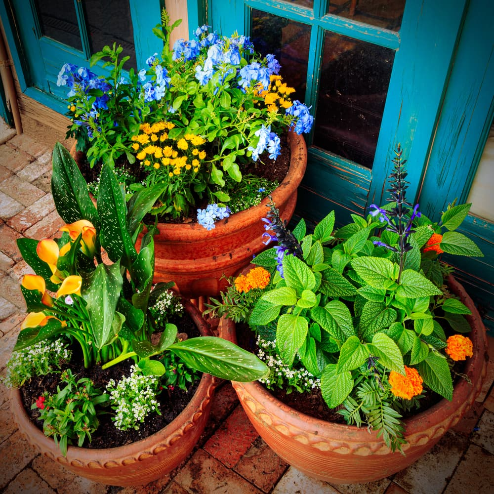 various colourful plants in terracotta planters