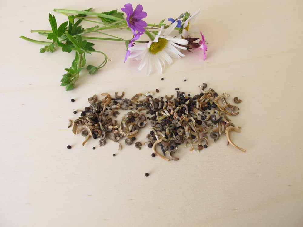 bee friendly wildflower seeds on a table