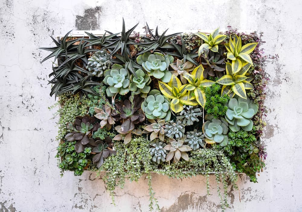 succulents growing on a masonry wall