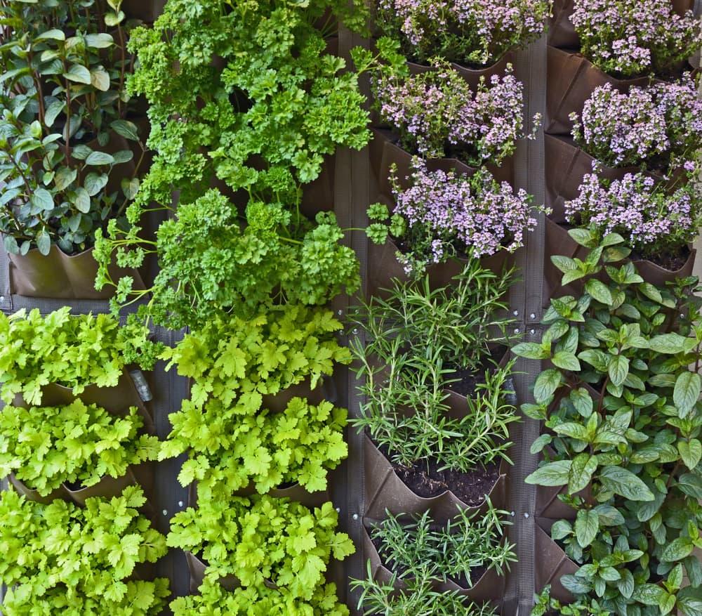 vertical herb garden in an urban garden