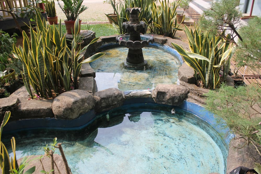 pools of water with garden snake plants
