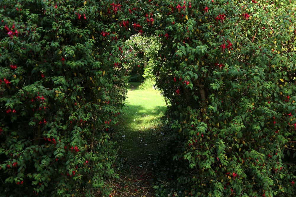 an archway leading through dense shrubbery