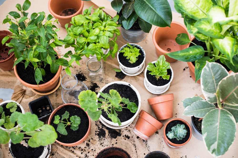 various plants and herbs in different types of pots