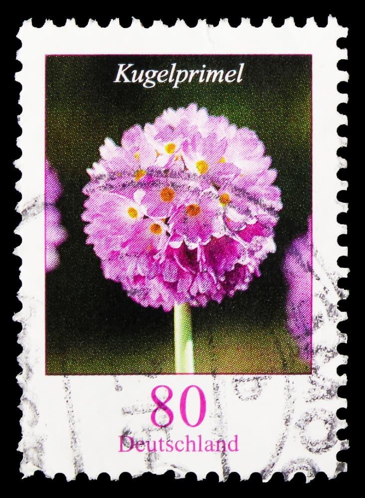 Drumstick Primula on a German postage stamp