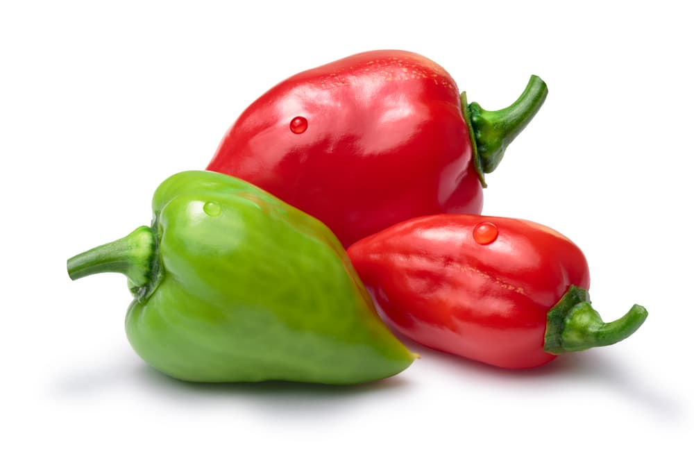 Red and green Habanero peppers on white background