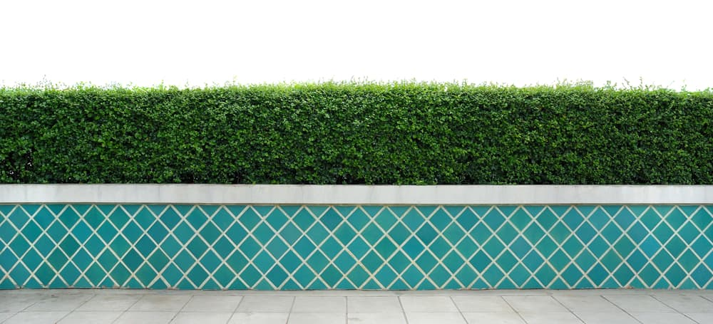 a light blue tiled wall with green hedging