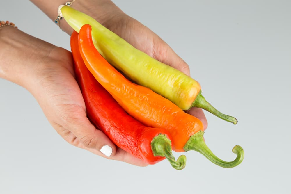 3 hungarian wax chillies held in hands at different stages of ripeness