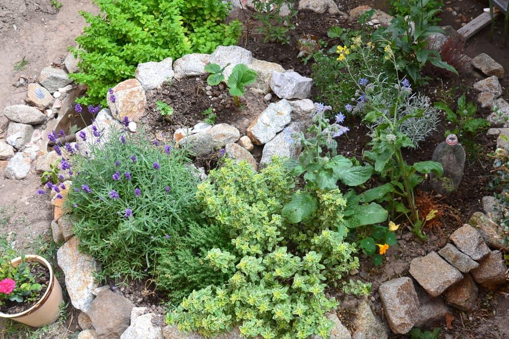 a herb spiral garden
