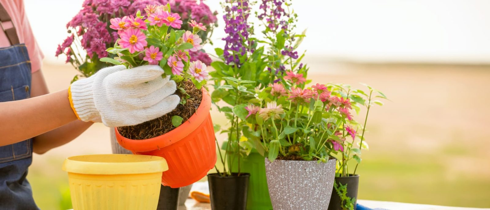 a woman repotting plants into various sized containers