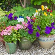 containers of flowers in a shaded garden corner