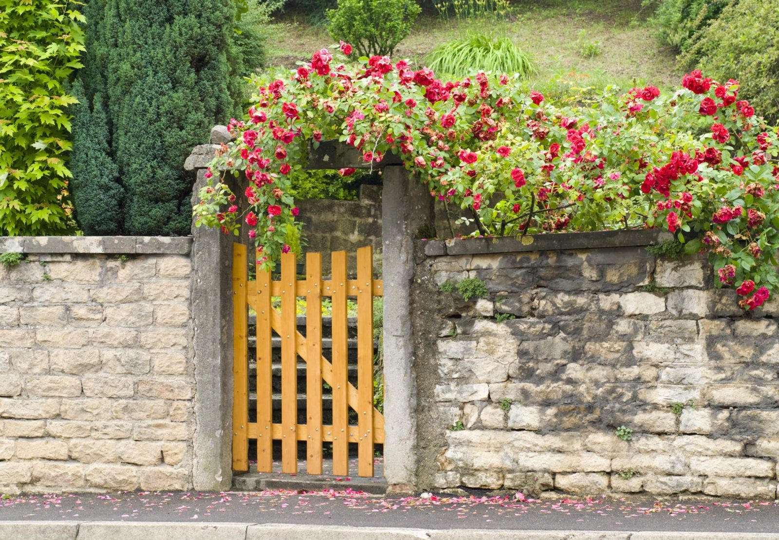 gated entrance to a front garden covered in roses