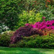 beautiful garden in bloom during summertime