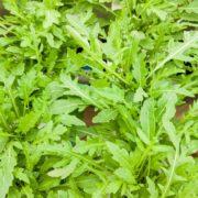 Wild arugula rocket leaves