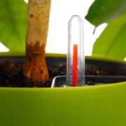 red indicator showing in a green self watering plant pot