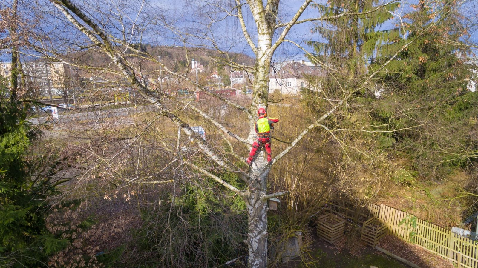 a tree surgeon with a high visibility jacket high up a tree