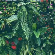 tropical plant wall with ferns and flowers