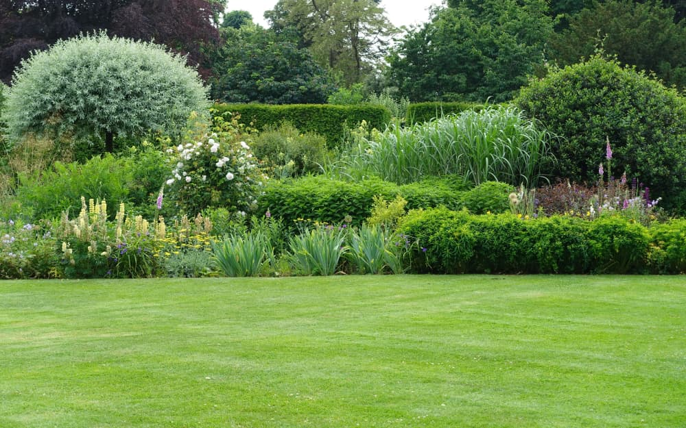 a well kept garden with mowed lawn and various wildflowers, trees and hedges in the background