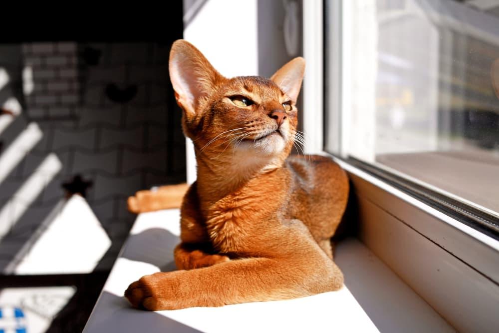 a cat enjoying the sun on a windowsill