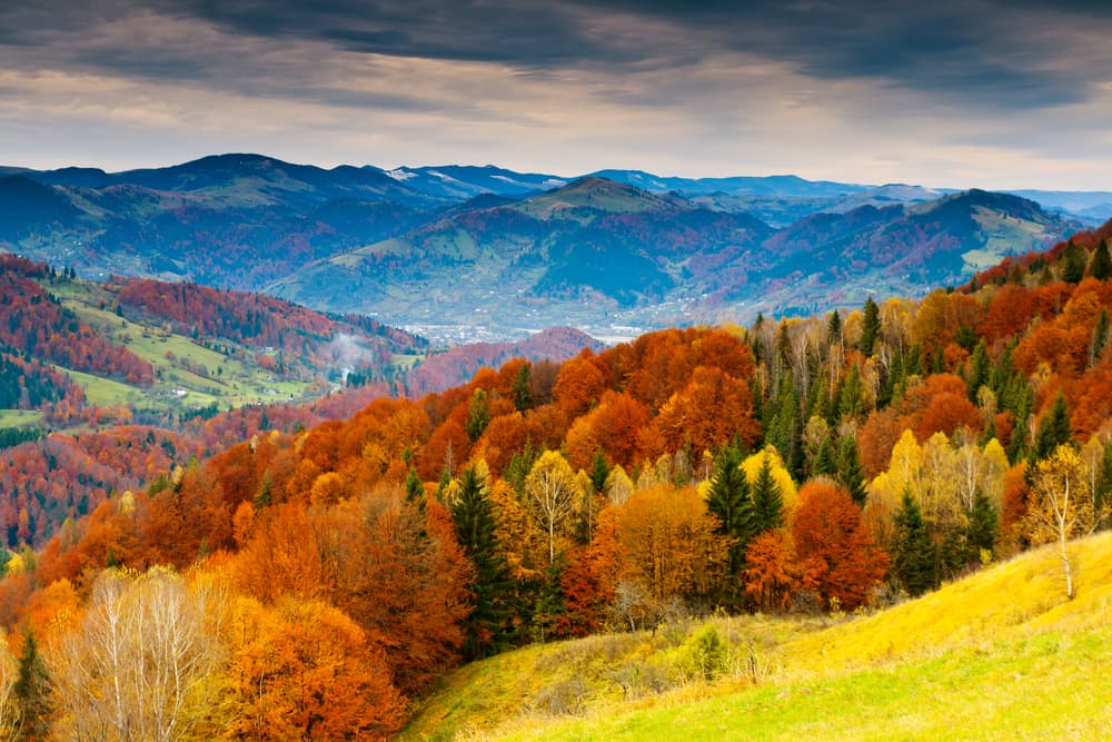 autumnal mountain landscape with shades of brown, yellow and green trees