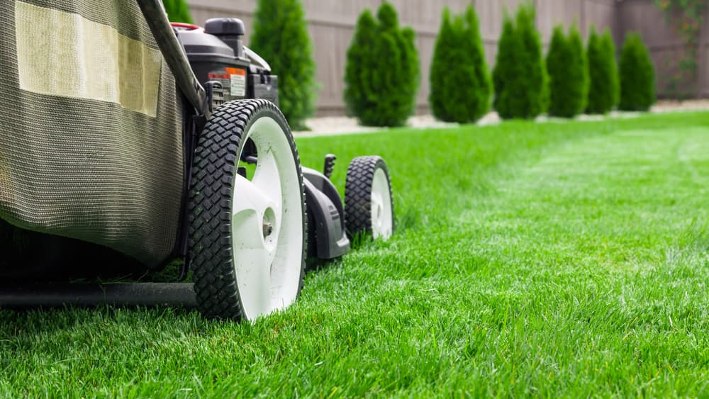 lawn mower being used on grass with topiary in the background