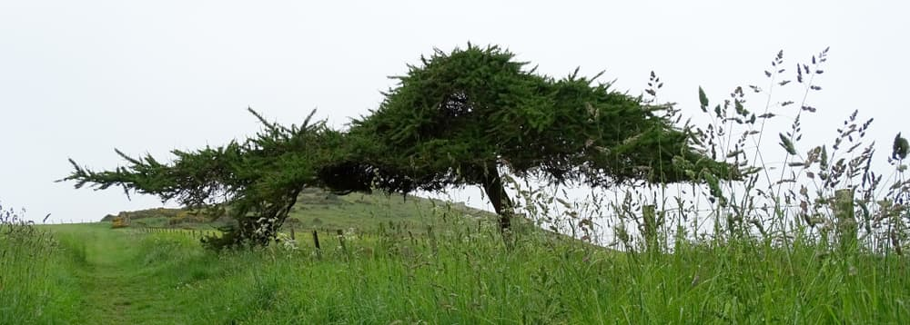 a pine tree on a hilltop