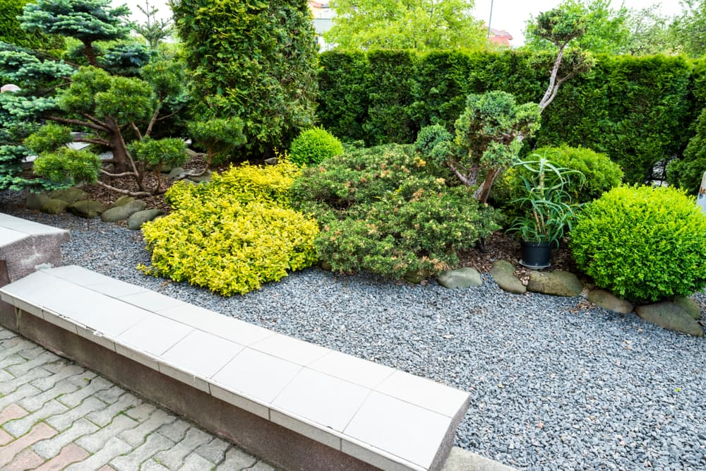 various evergreens in the background with a gravel bed and wall in the foreground
