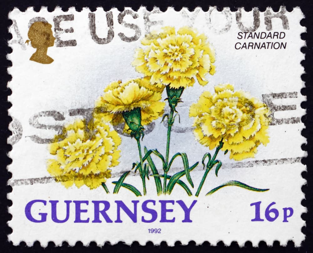 a 16p Guernsey stamp from 1992 with illustrated yellow dianthus caryophyllus
