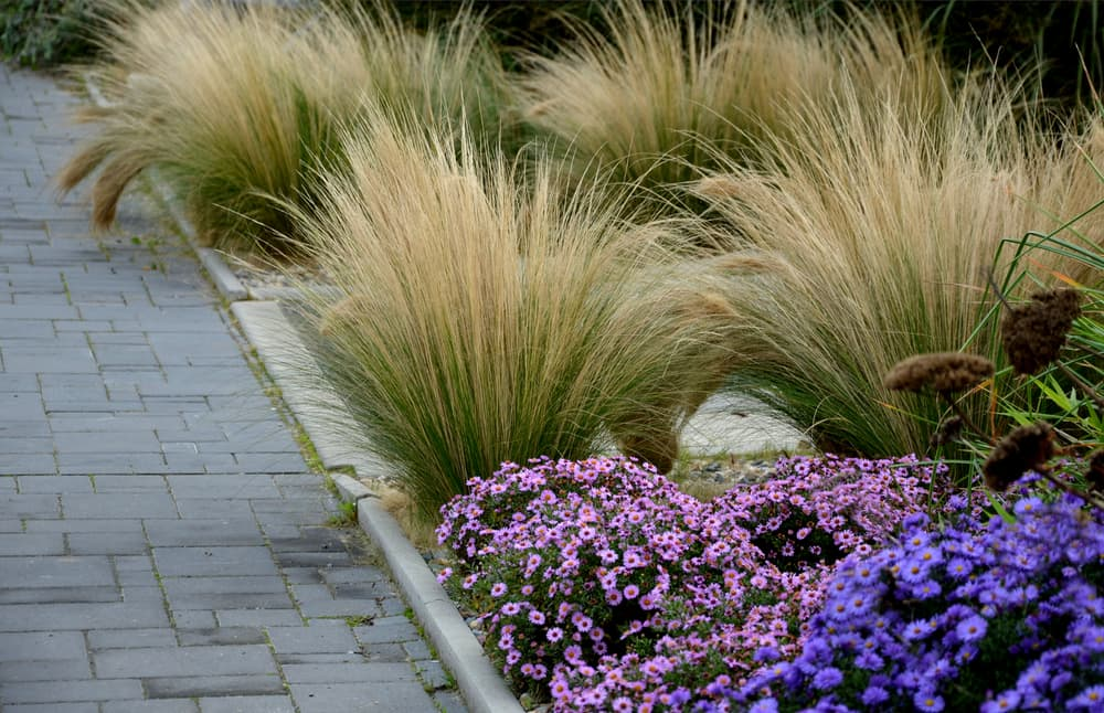 tiled walkway with perennials and grasses growing alongside