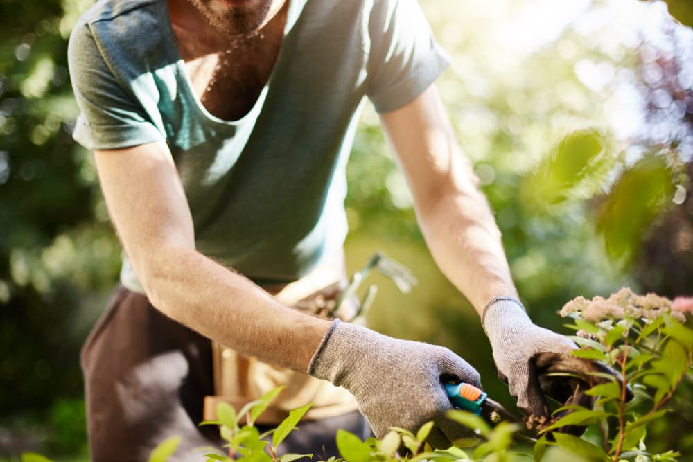 man in a t-shirt pruning bushes with gloves on