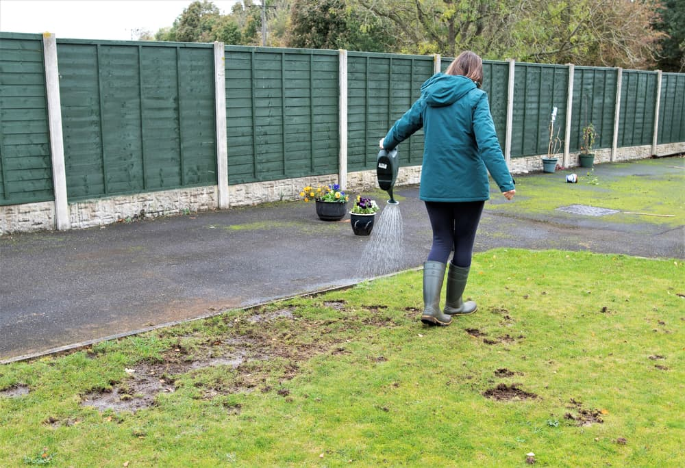 woman using a water can to apply nematode control on a lawn