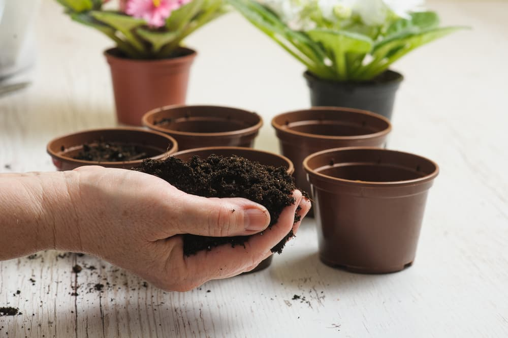 soil being planted into small brown pots
