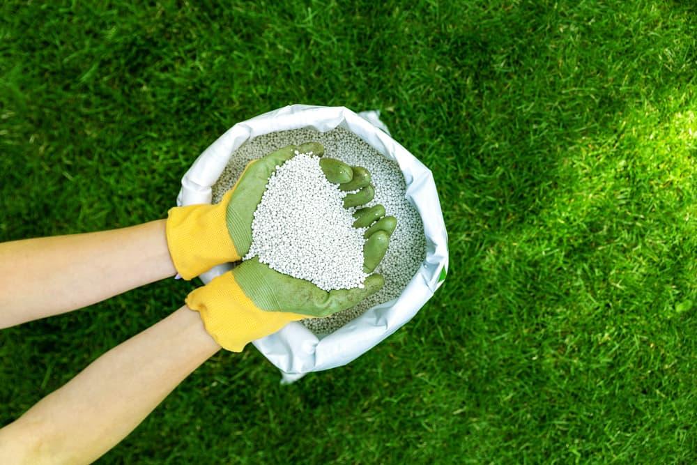 fertiliser granules being held in two hands with gardening gloves