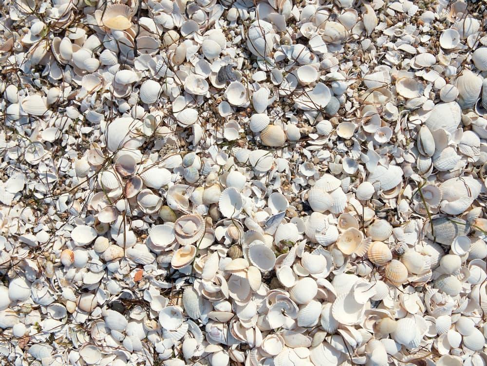 white seashells on the ground