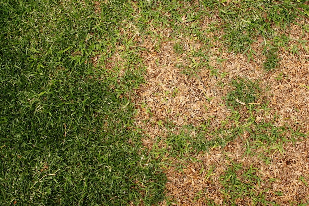 a very patchy lawn