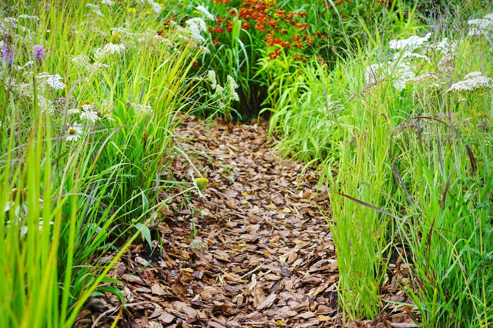 a wood chip pathway with wildflowers on either side