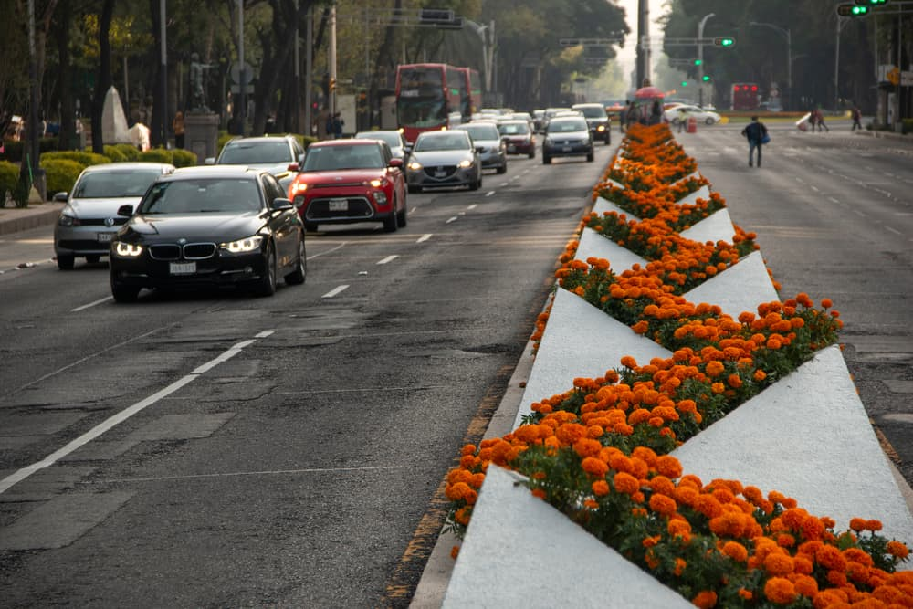 A Planting of Golden Marigolds Decorates a Busy Road in Mexico City